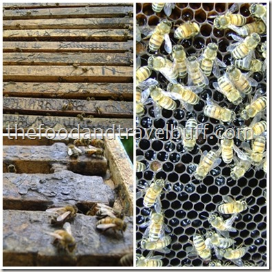 bees hive